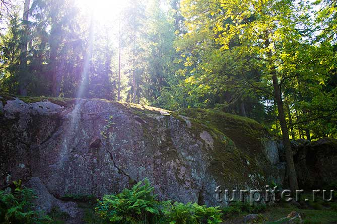 скалы в лесу Монрепо
