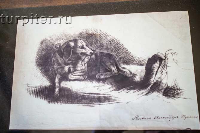 черно-белый рисунок Пушкина А.С.