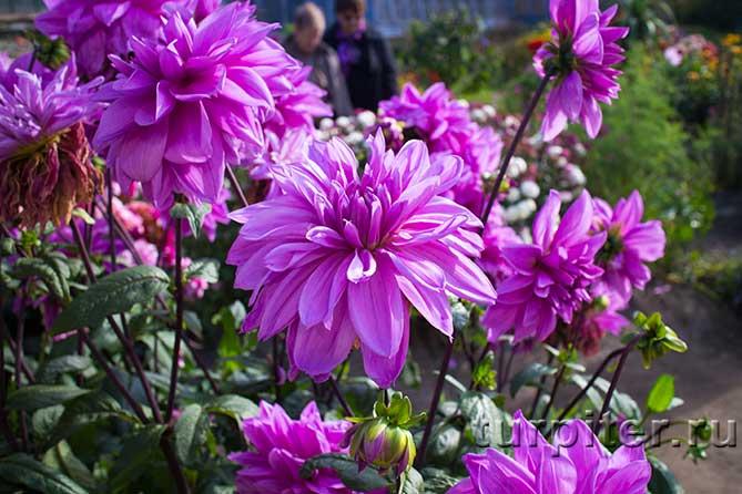 несколько цветущих цветков