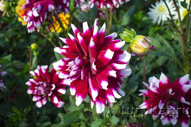 красивая расцветка из двух цветов