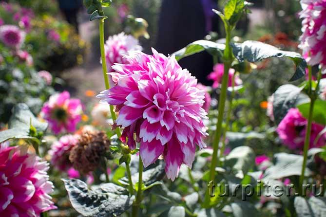 цветок цветущий цветок Ботанический сад