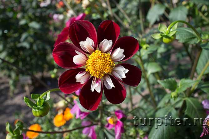 Распустившийся цветок в Ботаническом саду