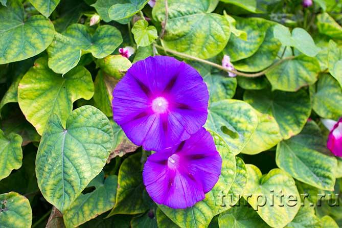 два цветка на фото