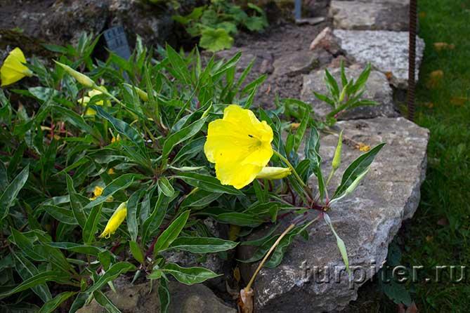 красивое желтое растение
