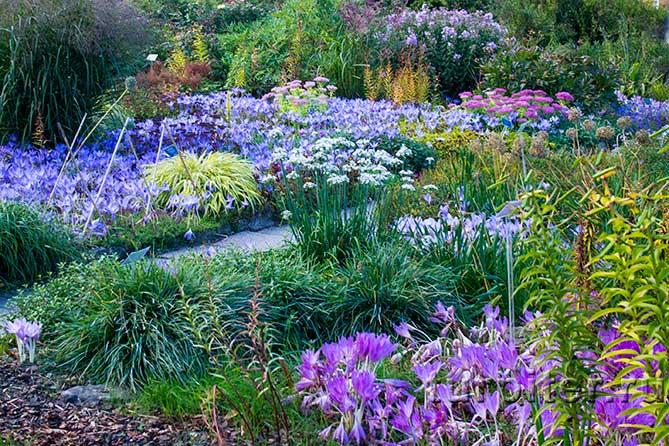 несколько видов цветов