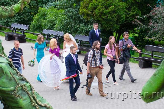 невеста жених и фотографы