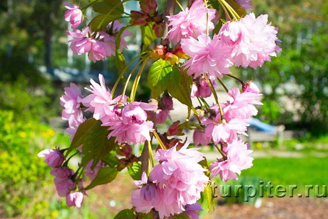 несколько цветков