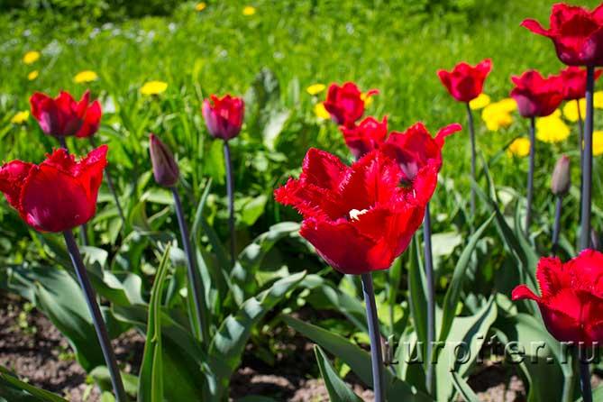 цветут на клумбе