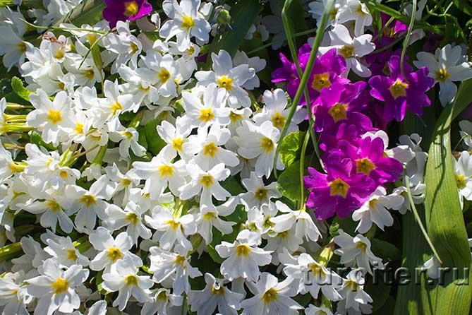 два вида цветов