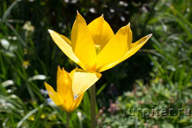 Ботанический Сад желтые цвет