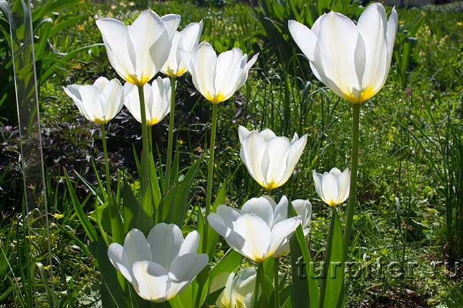 солце светит на цветы
