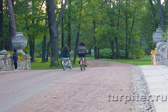 На велосипеде Петергоф Александрия