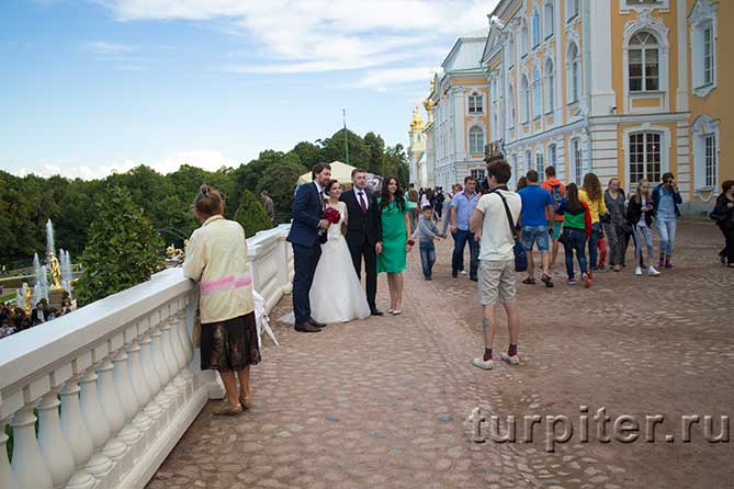 Свадьба в Петергофе фотограф