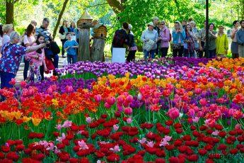 люди пришли на фестиваль тюльпанов