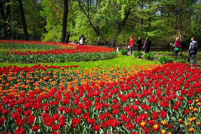 люди расматривают посаженные тюльпаны