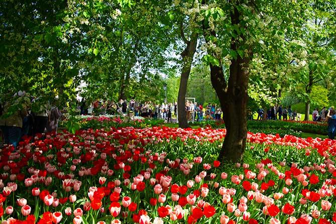 много людей в парке на фестивале тюльпанов